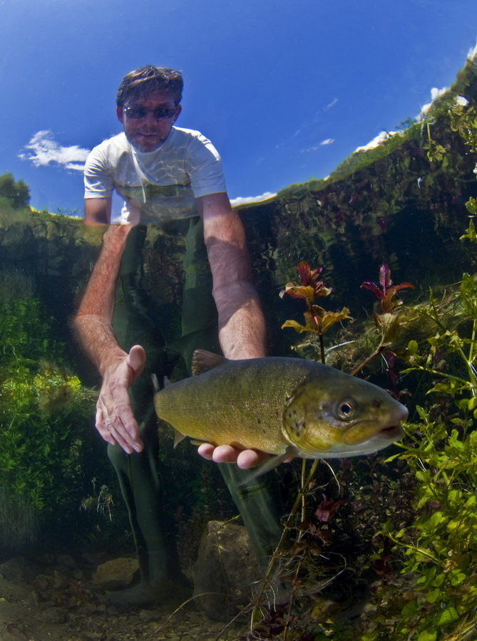 Anglers' paradise at risk: A biologist releases a rare softmouth trout after tagging it. Photo: Arne Hodalic