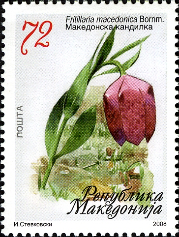 Fritillaria macedonica on an official stamp (2008) as part of the Macedonian natural heritage. Source: http://www.wnsstamps.ch