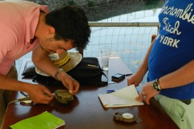 Amphibians/Reptiles working group: several animals were captured, measured and released.