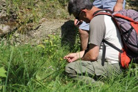 Vascular plants working group under the guidance of Prof. Ljupcho Melovski/MES. The key feature of the Vjosa valley habitats is their Mediterranean character and uniqueness which is specific to the southern Balkan Peninsula.