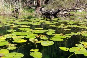 """Mitten im Karstgebiet sind gleine grüne Auen, die die Einheimischen """"luke"""" nennen. Weidenbäume, Espenbäume, sogar Seerosen, Schilf und weitere Wasserpflanzen sind dort zu finden."""