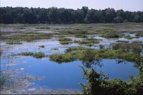 Temporal flood in the Sava River´s floodplain.