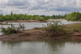 Im Unterlauf ist die Drina ein naturnaher Fluss mit großen Schotterinseln und vielen Nebenarmen. Hier brüten auch Flussseeschwalben.